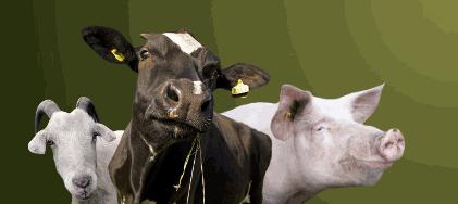 Заказать Услуги перевозки скота по Украине и за рубеж спецавтотранспортом