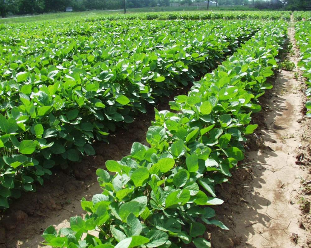Переработка сельхозсырья на давальческих условиях