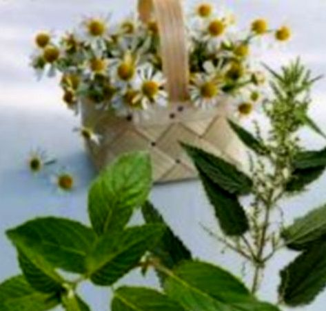 Заказать Заготовка сырья. Заготовки лекарственного сырья, овощных и дикорастущих культур Западная Украины