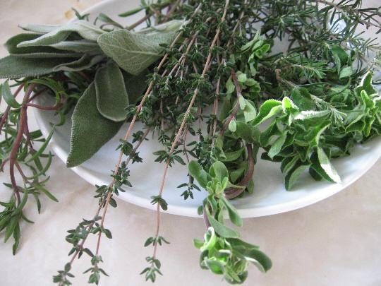 Заказать Реализация сырья. Заготовки лекарственного сырья, овощных и дикорастущих культур Западная Украины
