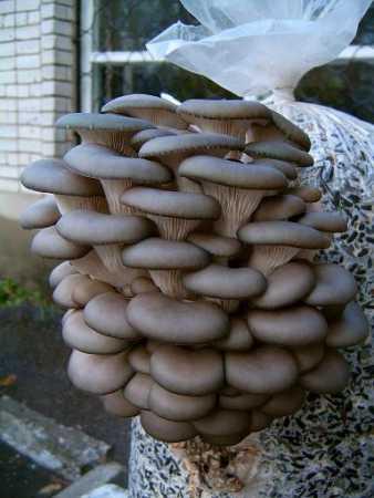 Заказать Переработка и реализация грибов. Заготовки лекарственного сырья, овощных и дикорастущих культур Западная Украины