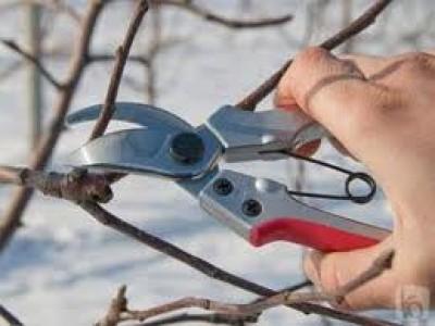 Заказать Обрезка деревьев