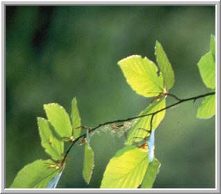 Заказать Вырубка лесных делянок