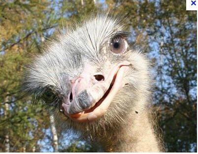 Заказать Основным направлением деятельности является разведение и содержание африканских страусов. Предоставляем возможность семейного отдыха выходного дня (экскурсии).