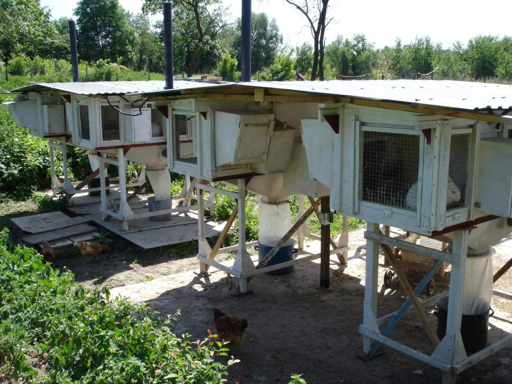 Заказать Разведение кроликов племенных пород Черкасская область