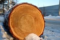 Заказать Распиловка древесины Житомирская область