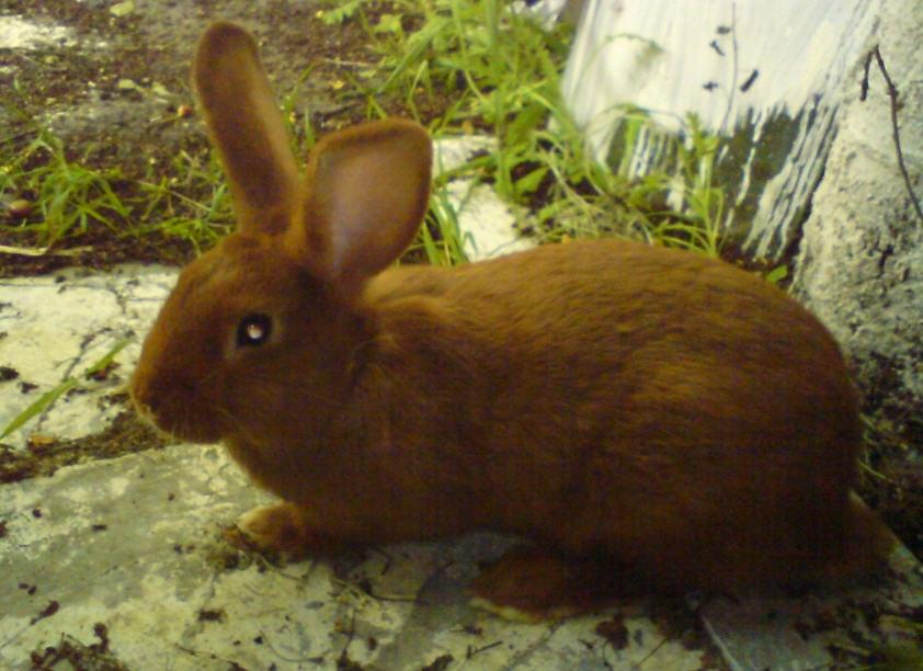 Заказать Комплексная вакцинация кроликов, г.Вознесенск