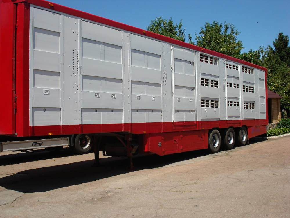 Заказать Перевозка крупного рогатого скота скотовозом