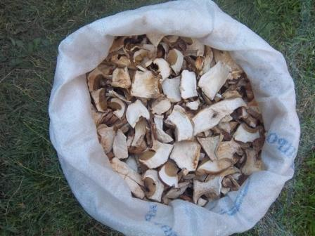 Заказать Сухі білі гриби