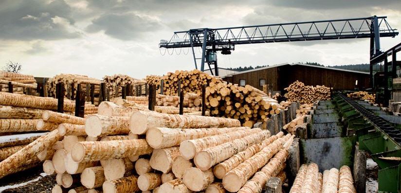 Заказать Заготовка леса и пиловочника
