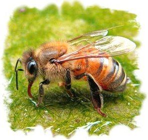 Заказать Пчелотерапия (сон с пчелами)