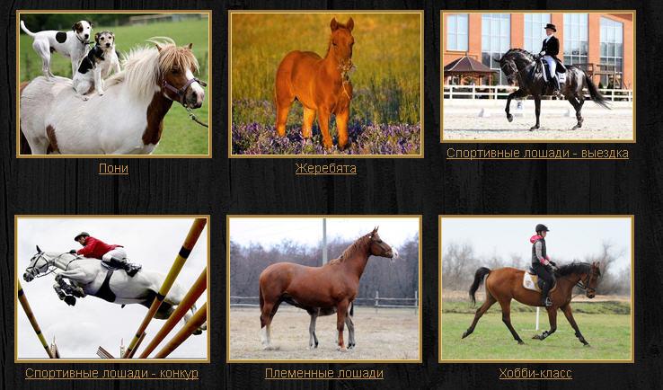 Заказать Продажа племенных лошадей