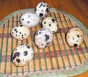 Заказать Яйця перепелині