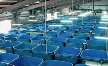 Заказать Создание рыбного хозяйства