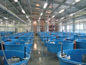 Заказать Проектирование рыбного завода (установок замкнутого водоснабжения)