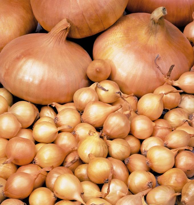 Заказать Семена лука чернушки сорта штудгартен
