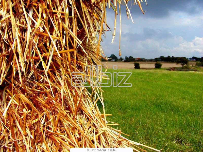 Заказать Перевозка зерна. Оформляем карантинные, ветеринарные сертификаты на перевозимую сельхозпродукцию