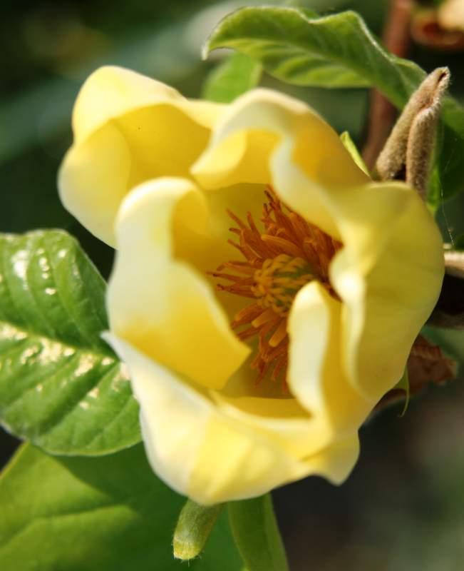 Заказать Выращивание, продажа и пересылка по Украине декоративных растений для сада
