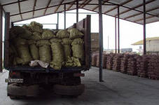 Заказать Доставка картофеля по Украине