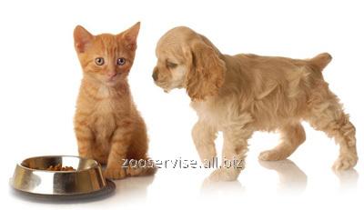 Заказать Консультации ветеринарные