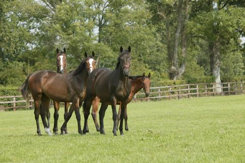 Заказать Разведение лошадей