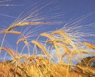 Заказать Выращивание зерновых, технических культур
