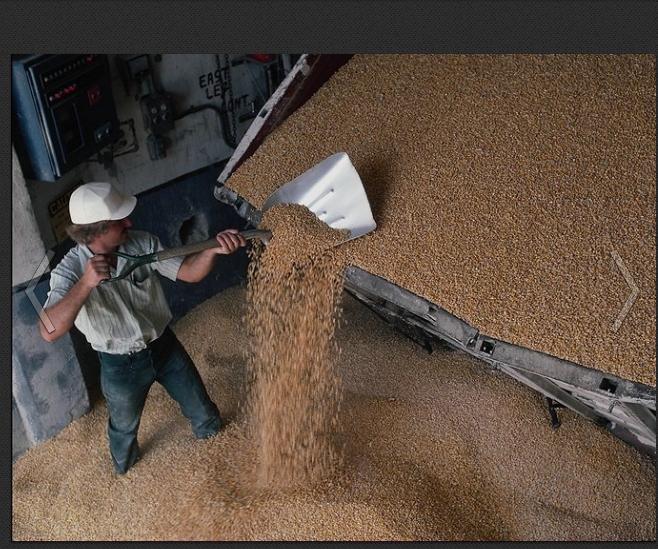 Заказать Перевозки зерновых культур.АгроБуд, МБО