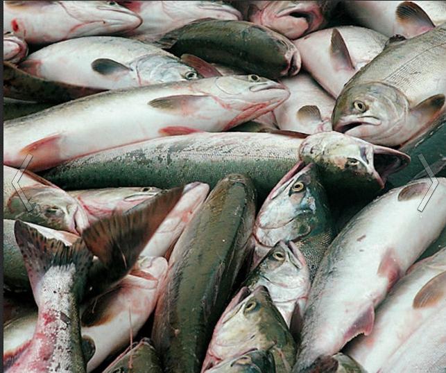 Заказать Промышленное производство рыбы