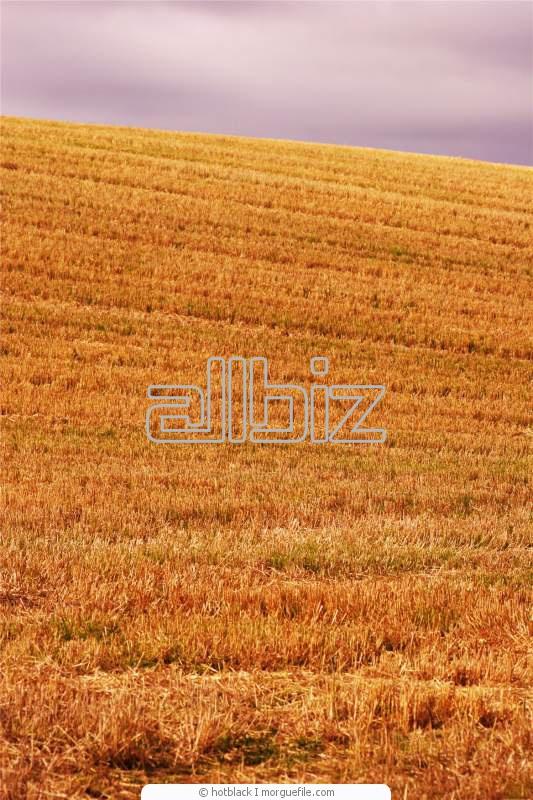 Заказать Уборка зерновых комбайнами: John Deere, Case, New Holland, Class, Massey Ferguson , Енисей.