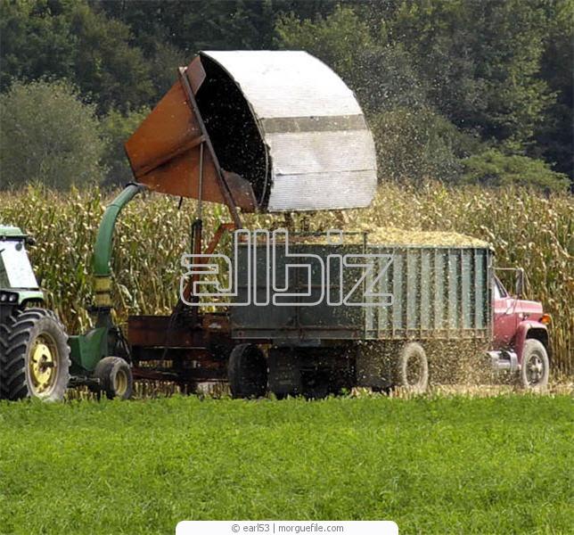 Заказать Вывоз зерна зерновозами с полей хозяйства или доставка зерна в порты Украины