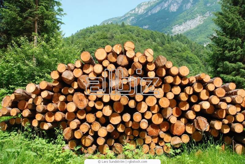 Заказать Торговля древесиной