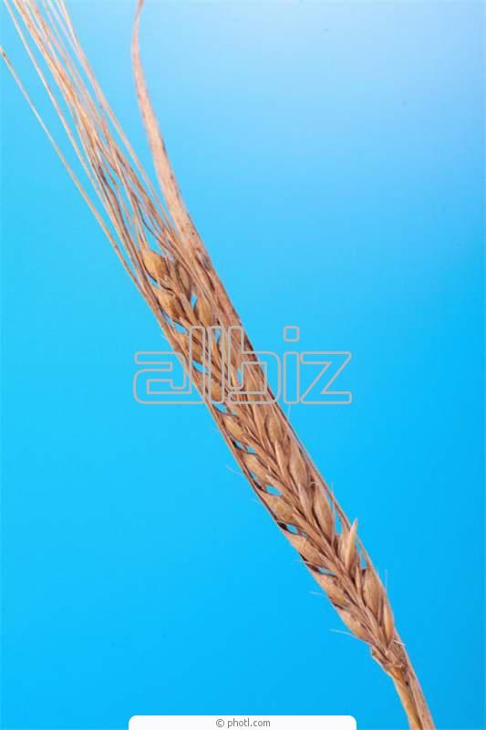 Заказать Выращивание зерновых технических культур