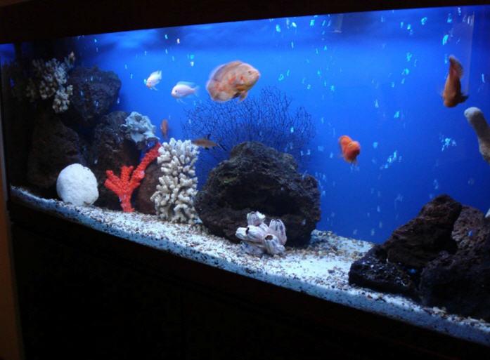 Заказать Монтаж аквариумных витрин