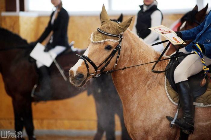 Заказать Лечебно-верховая езда