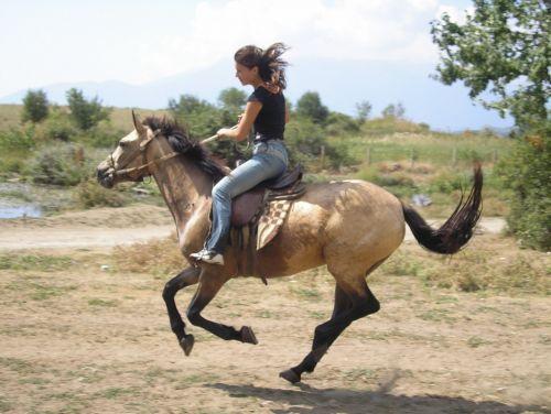 Заказать Конные прогулки по живописным местам