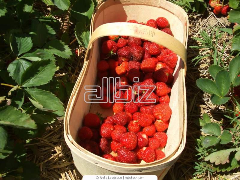 Заказать Выращивание клубники