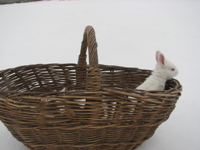 Заказать Купить тушки кролика, кролик в тушках , Хмельницкий, бой кроликов и первичная обработка, подам мясо кроликов, Украина, Хмельницкий, куплю мясо кроликов, куплю мясо кроля, купить мясо кроликов, Хмельницкий , куплю мясо кроликов, оптом