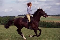 Заказать Прогулки на лошадях