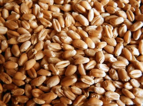 Заказать Перевозка зерна
