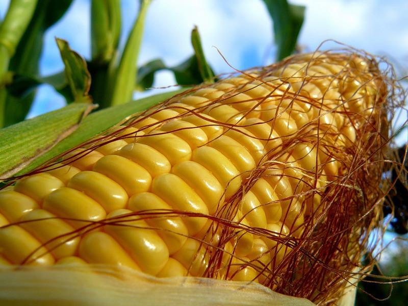 Заказать Перевозка по Украине кукурузы. 40т