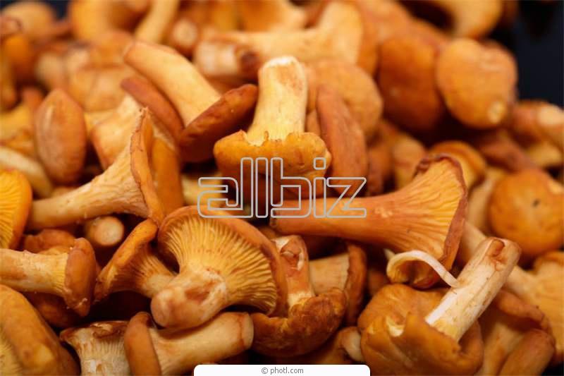 Заказать Переработка грибов