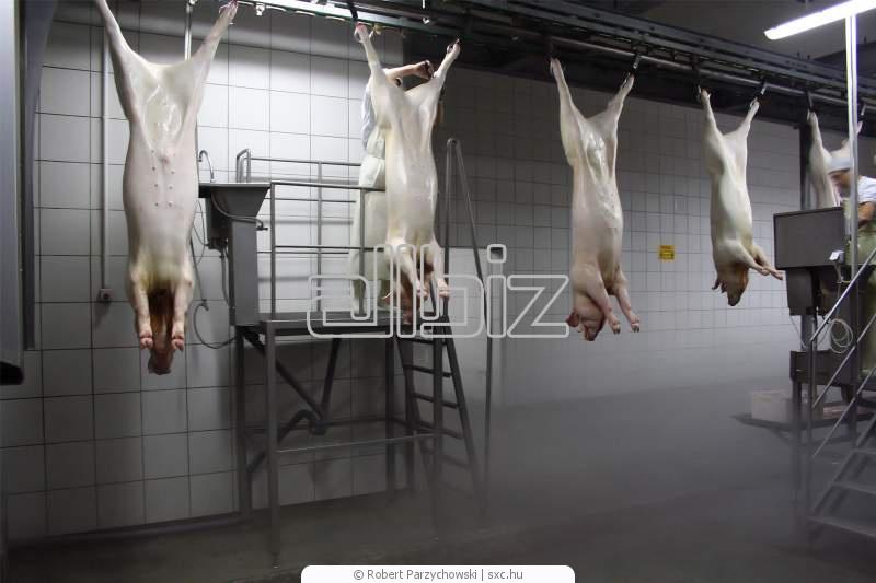 Заказать Забой свиней