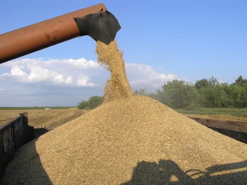 Заказать Отгрузка на автотранспорт зерновых культур