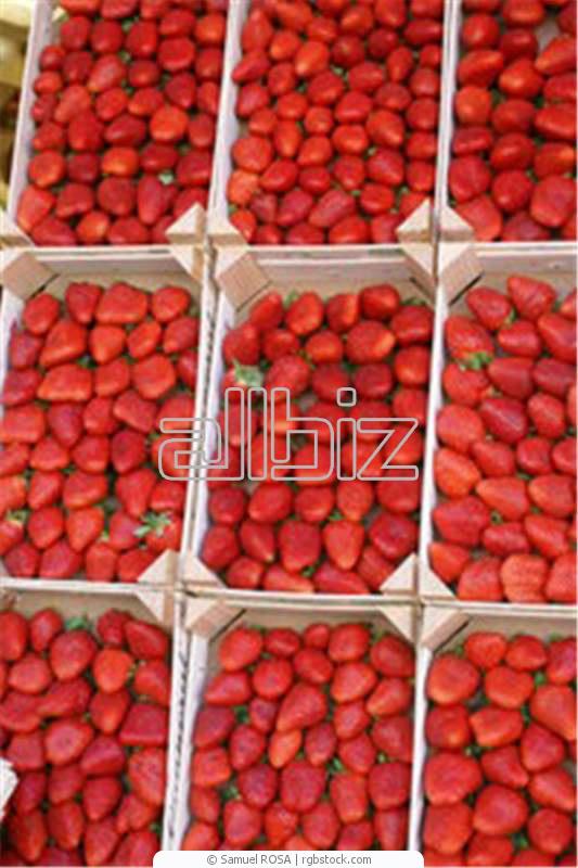 Заказать Закупка ягод, Закупка ягод, грибов, орехов и др.