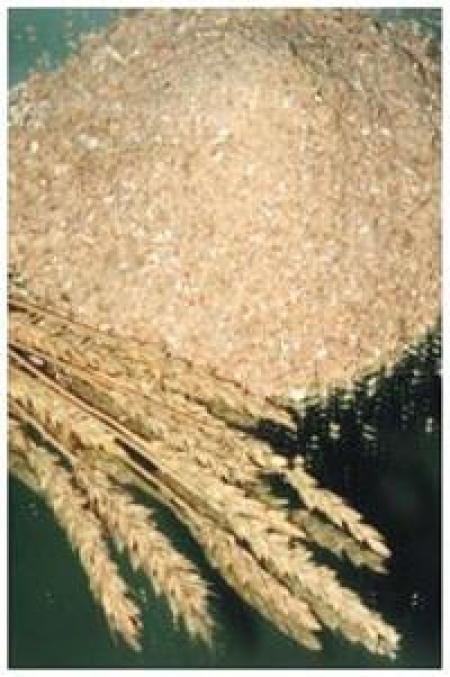 Заказать Производство готовых кормов для животных, Заготовка, сушка, хранение семенного зерна