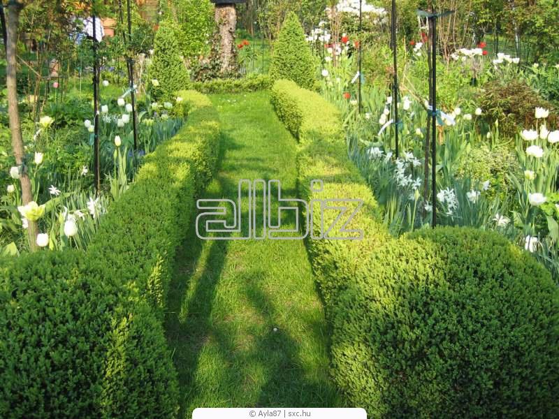 Растения для живой изгороди от  производителя многолетних цветов для сада, декоративных трав и пряных растений.