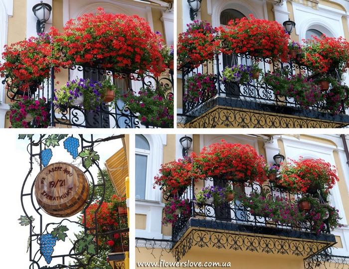 Самые лучшие виды и сорта растений для сада, балконов и террас.   Посадочный материал высокого качества для создания уникальных цветущий садов и уютных летних террас.