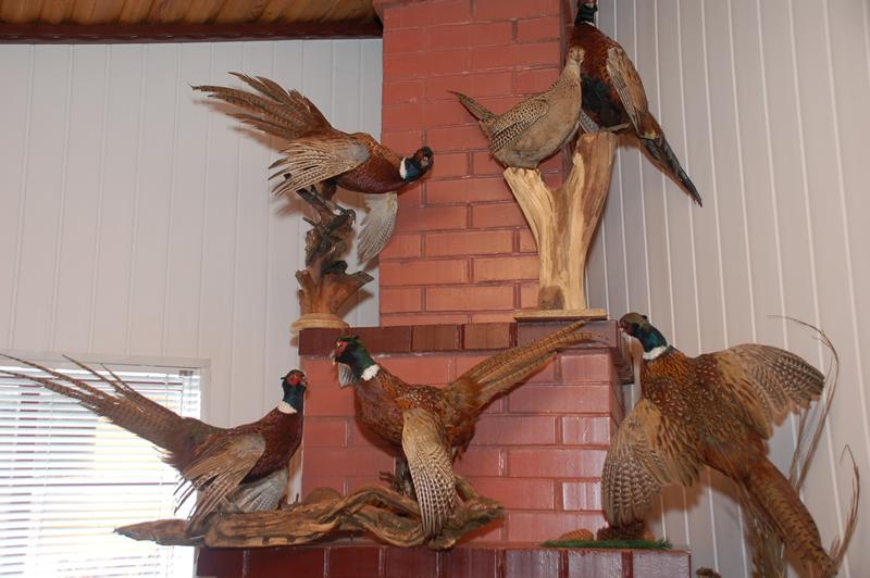 Как сделать чучело из птиц в домашних условиях
