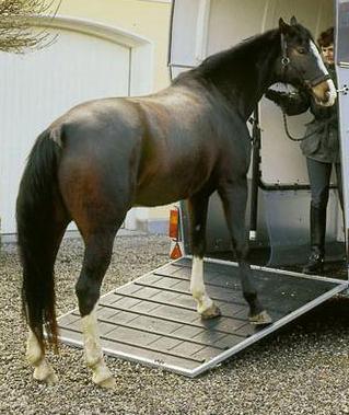 Заказать Перевозка лошадей