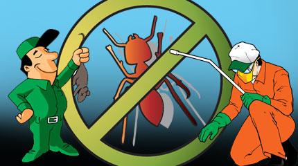 Дезинсекция. Борьба с муравьями
